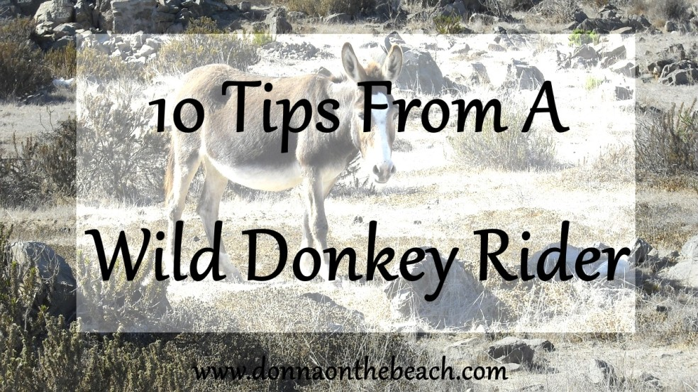 10 tips from a wild donkey rider